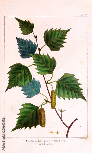 Illustration of plant - 200660872
