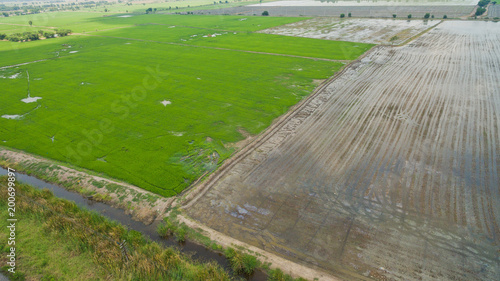 Plexiglas Donkergrijs Aerial view from flying drone of Field rice with landscape green pattern nature background / top view field rice
