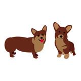 corgi, corgi dog, animal, dog, pet, puppy