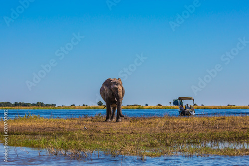 Tourists with boats watching the elephant