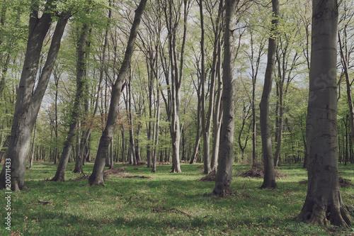 Fotobehang Khaki Beautiful forest landscape. Colourful summer scenery.