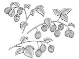 Raspberry graphic branch black white isolated set sketch illustration vector - 200714201