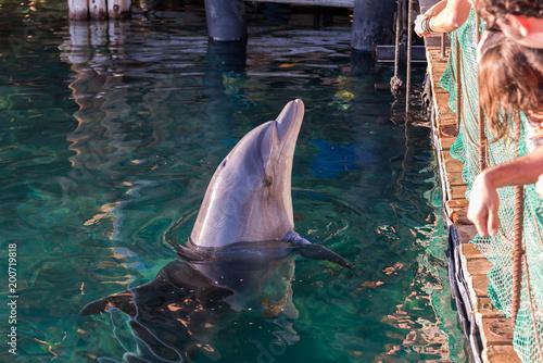 Foto Spatwand Dolfijn At Dolphin Reef in Eilat