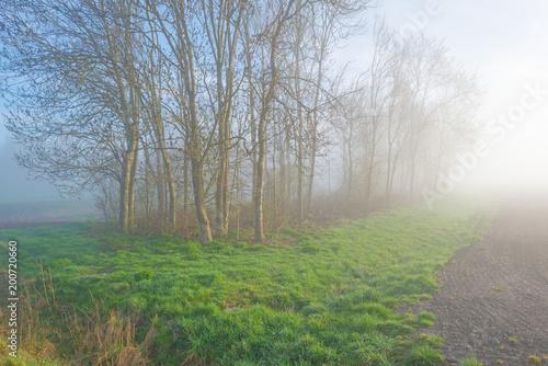Drzewa w mgłowym polu w świetle słonecznym w wiośnie