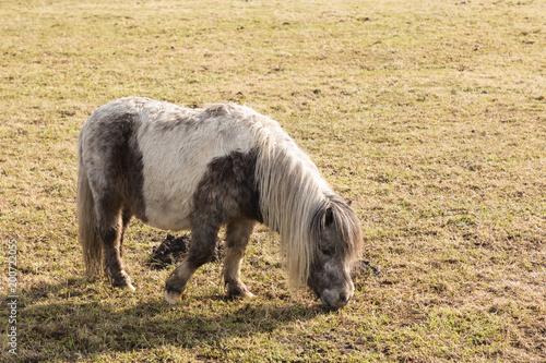 Fotobehang Paarden horses in a marsh landscape