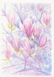 Flowering branches and flowers of magnolia, watercolor - 200724257