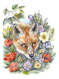 Drawing foxes in flowers, watercolor, tattoo - 200724694