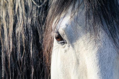 Fotobehang Paarden Details of horse's head