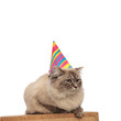 adorable birthday cat lying on wooden box waits its cake