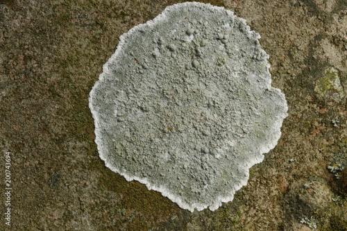Staande foto Stenen Churchyard Crustose lichen, Norfolk UK