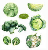 Hand-drawn watercolor food illustrations. Isolated drawings of the fresh vegetables - cabbage, cauliflower, brussels sprouts and broccoli - 200744622