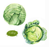 Hand-drawn watercolor food illustration. Green fresh cabbage isolated on the white background - 200744623