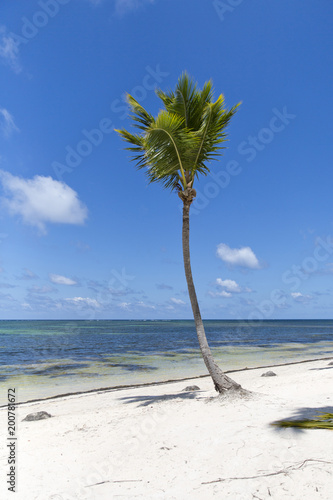 Keuken foto achterwand Tropical strand Coconut Palm trees on white sandy beach in Caribbean sea, Saona island. Dominican Republic