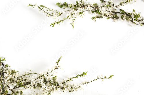 Fototapeta Spring blossoms on white. Floral border.