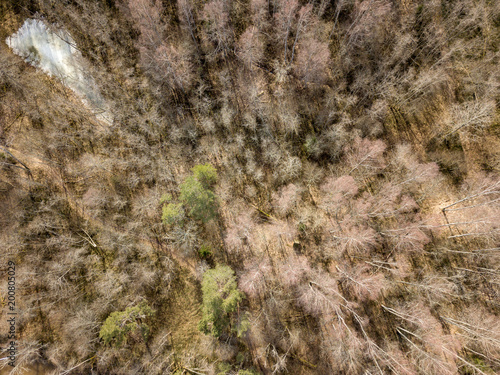Aluminium Stenen drone image. aerial view of forest from above trees with long shadows