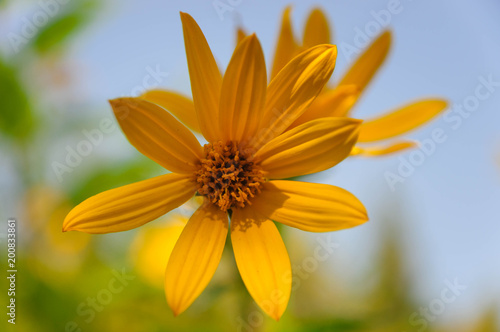 Yellow flowers on blue sky background.