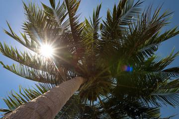 Sun rays piercing palm leaf, Koh rong Samloem, Cambodia.