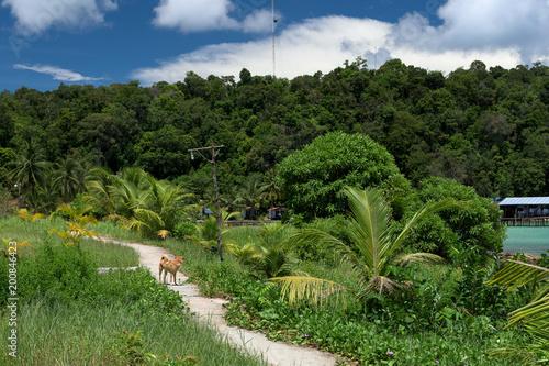 Piękny widok dżungli w tropikalnej wyspie Koh Rong Samloem. Pies rozgląda się na betonowej ścieżce. Kambodża, Azja.