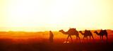 Caravan of camels in Sahara desert, Morocco