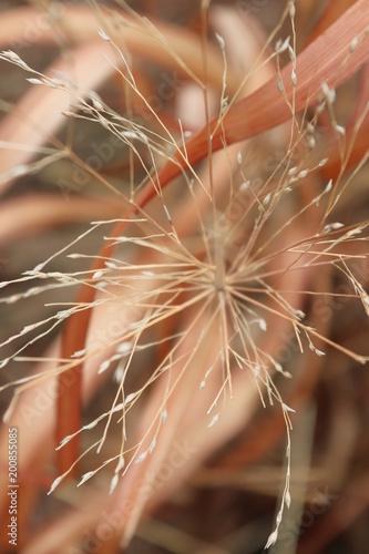 Fotobehang Paardenbloemen Early spring vegetation
