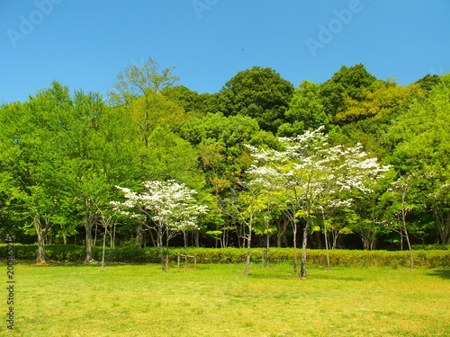 Hanamizuki kwitnący park krajobrazowy