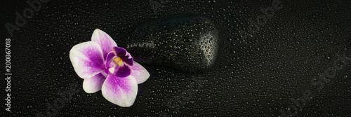 Pink orchid with black stone and water drops on black background - 200867018