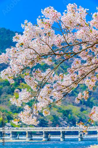 Fotobehang Kyoto 京都 春の嵐山渡月橋