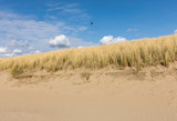 Grasses in a Sand Dune under a clear blue sky at Katwijk aan Zee, Holland