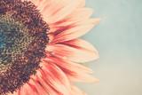 Macro shot of blooming sunflower - 200884052