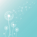 Dandelion blowing silhouette with flying dandelion buds. Vector illustration