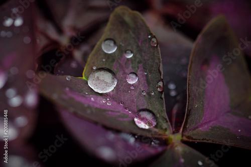 Close-up view of beatiful dark flower - 200885448