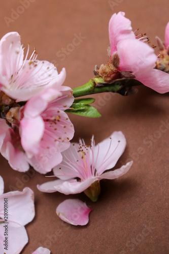 Różowy kwiat wiosny