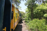 Train travelling through the jungle in Puerto Limon, Costa Rica, Central America.