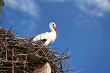 Stork has made his nest on a monument. People do not remove it. Central Balkan - Bulgaria.