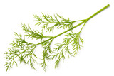fresh dill weed isolated on white - 200925218