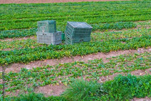 ackerlandschaft mit Kisten für Gemüse - 200935219