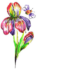 flowers, iris,watercolor,on a white