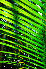 close up canopy of palm tree leaf forming graphical pattern