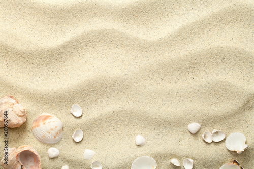 Fototapeta Sand Background with Shells