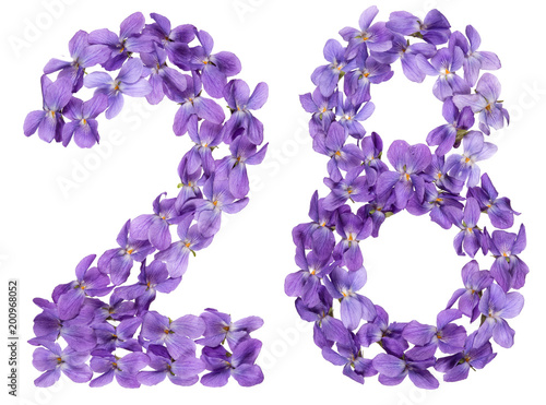 Poster Arabic numeral 28, twenty eight, from flowers of viola, isolated on white backgr
