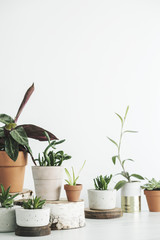 The modern interior of home garden filled a lot of plants in different design pots.