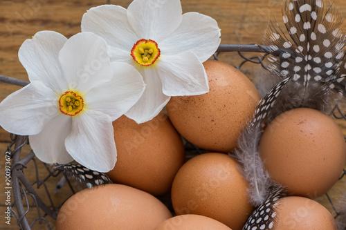 Zamknij się żonkile poety z brązowymi jaja kurze i piór