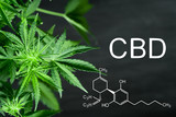 CBN chemical formula Beautiful background of green cannabis flowers A place for copy space - 200986291