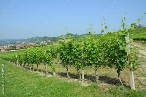 Deurstickers Wijngaard イタリア、ワインの里ピエモンテの風景