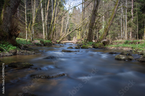 Foto Murales River in the spring forest