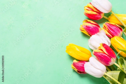 Flower tulip background on green. Top view copy space.