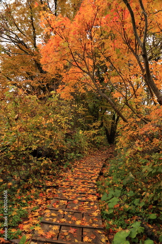 Foto op Plexiglas Oranje eclat 秋の獅子ヶ鼻湿原 Shishigahana-wetlands in autumn / Nikaho, Akita, Japan