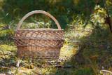 The empty wicker basket standing in green forest - 201031847