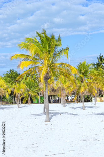 Keuken foto achterwand Tropical strand Landscape on an exotic beach with palm trees
