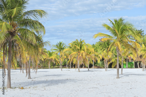 Foto Murales Heavenly place on earth, sun and sand with palm trees by the sea